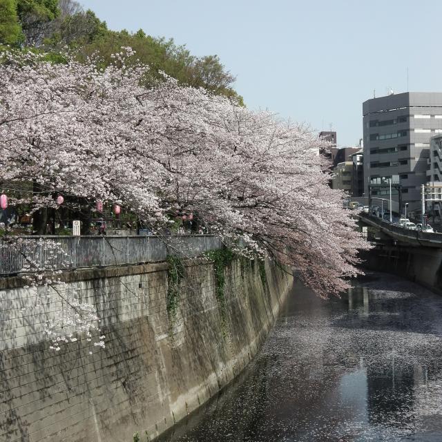 Sakura2018_059