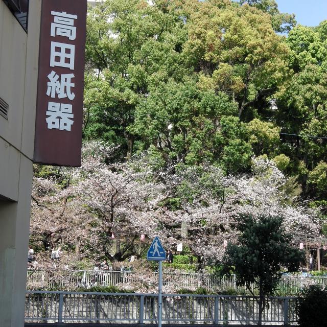Sakura2018_061
