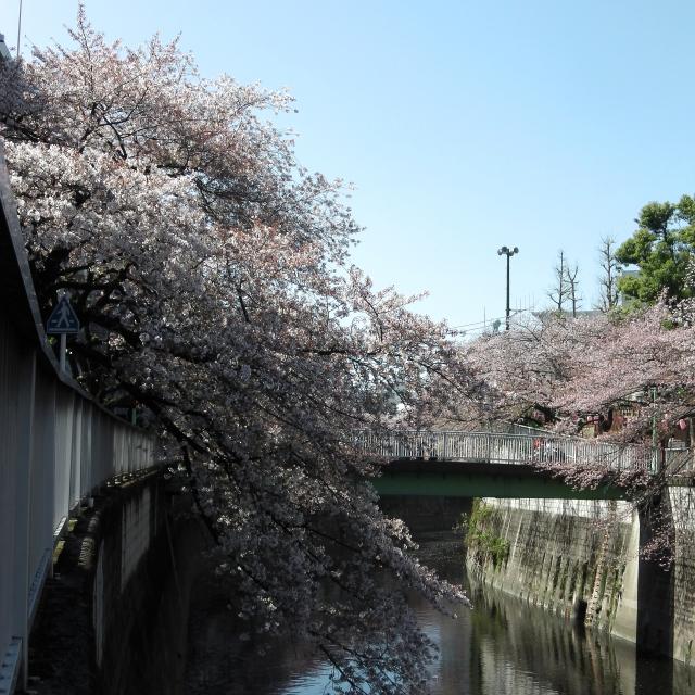 Sakura2018_066