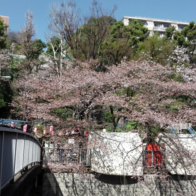 Sakura2018_069