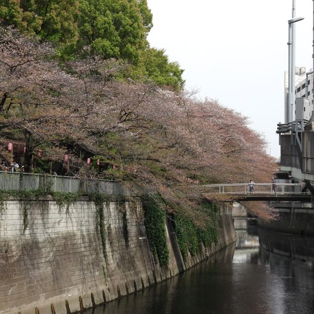 Sakura2018_072