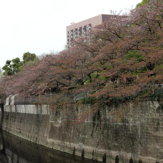 Sakura2018_074