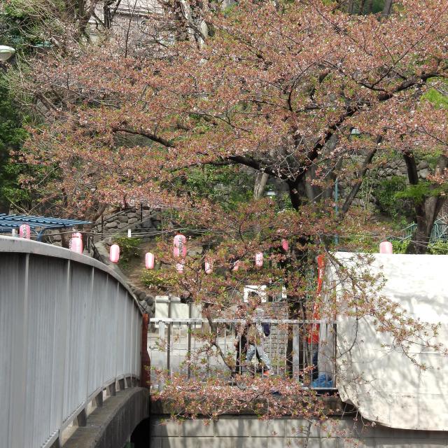 Sakura2018_077