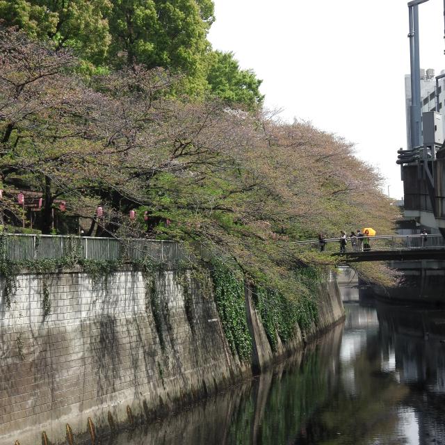 Sakura2018_079